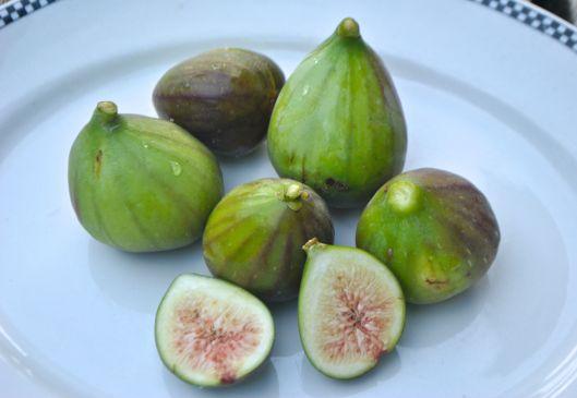 fresh figs from garden
