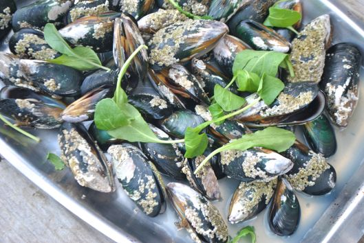 Steamed Mussels, picked fresh from the bay