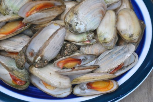 Bowl of cooked Pipis