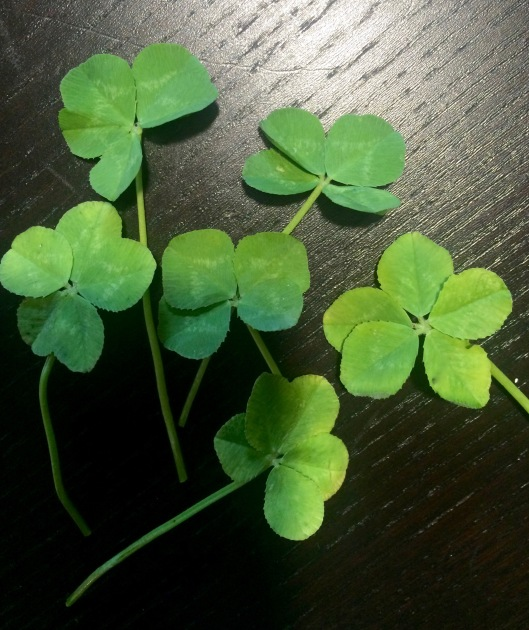 clovers from the summer classic